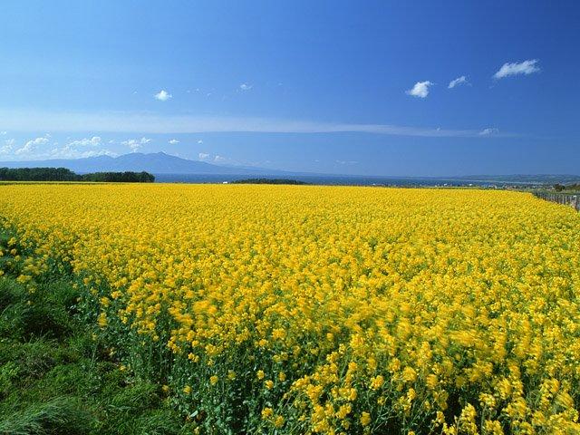 春 HOME | 地球 | 春 | 夏 | 秋 | 冬 格言集 | 童話集... 春/地球の四季
